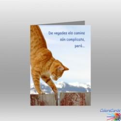 CAT 001