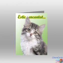 CAT 016